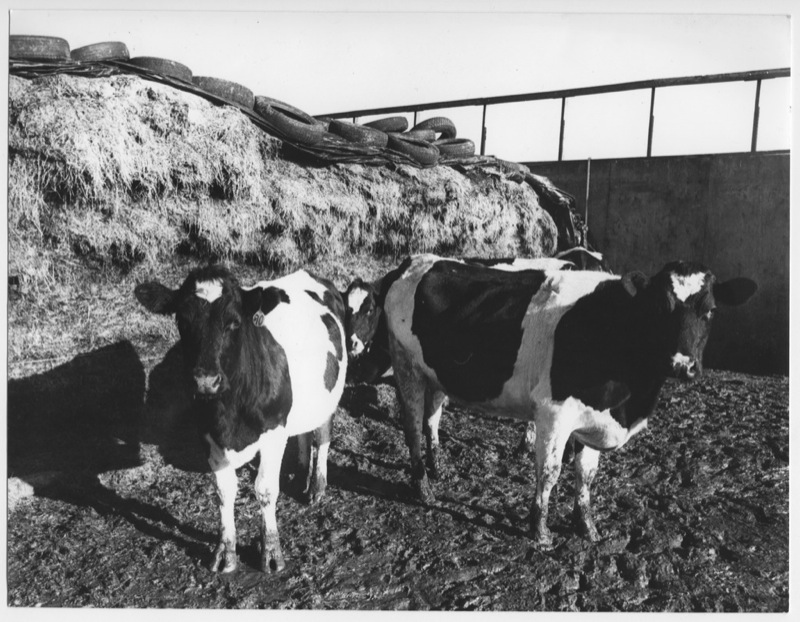 FARM 8.031.tif