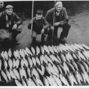 FISH 12HF 043.tif