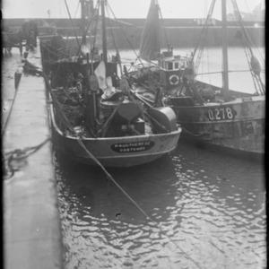 FISH 12PG 092.TIF
