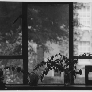 Windowsill, Serena Wadham's studio Islington London